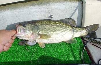 bass0903.jpg